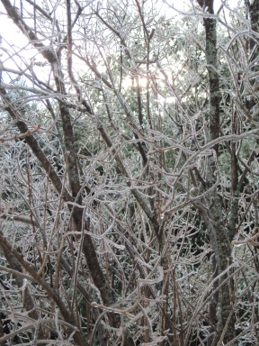 Winter 2012_12