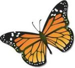 Do you know how to tell a male monarch from a female monarch? Do you want to learn how you can help the monarchs? Find out about these things and more... Bette A. Stevens, author of AMAZING MATILDA, A Monarch's Tale.
