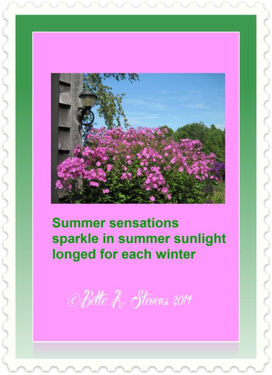 Summer Sensations HAIKU