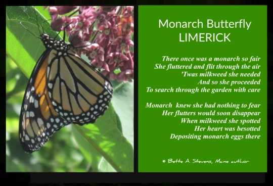 Monarch Butterfly LIMERICK 2 bas 2017