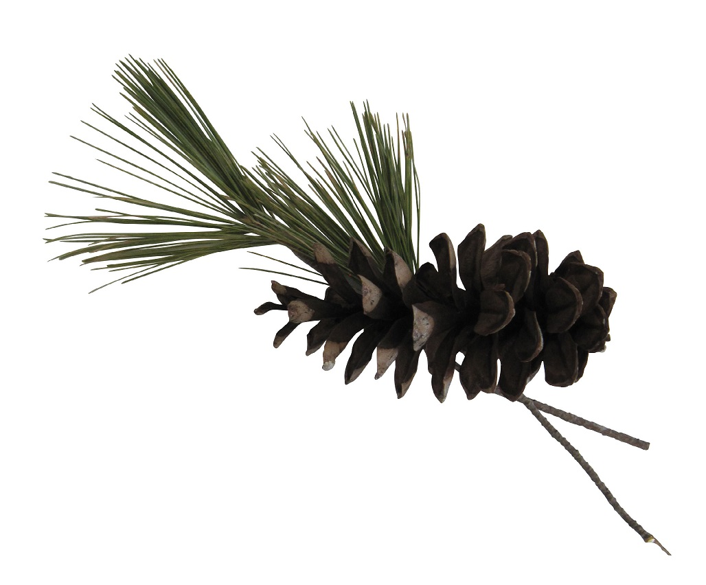 Pine Cone _ Tassels CROP for Digital Books BAS MAY 2019